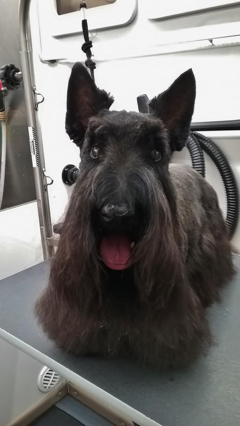 Top dog mobile grooming about us about us solutioingenieria Image collections