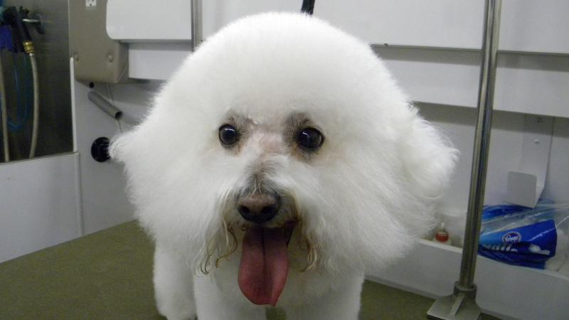Top dog mobile grooming home convenient quality complete professional solutioingenieria Image collections