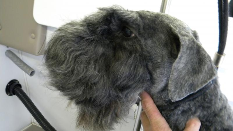 Top Dog Mobile Grooming - Home